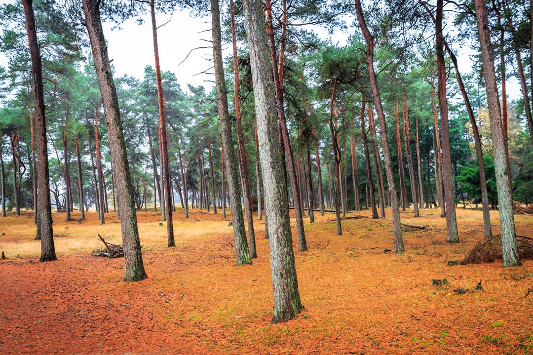 het-bos