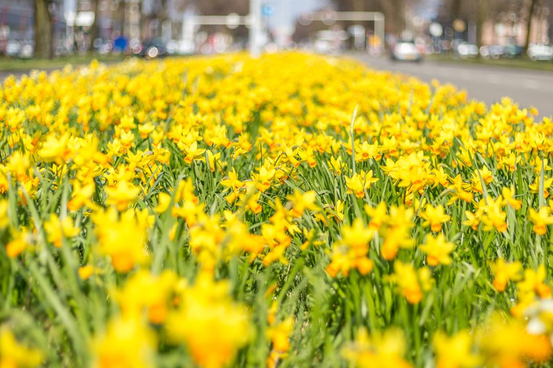 lente-bloemen