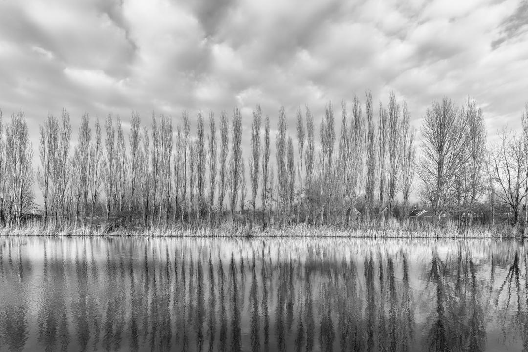 symetrie-bomen
